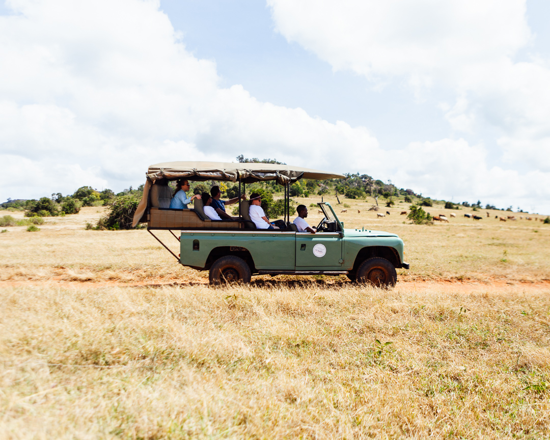 Game Drives in Kenya with a Land Rover and Sandgrouse Travel