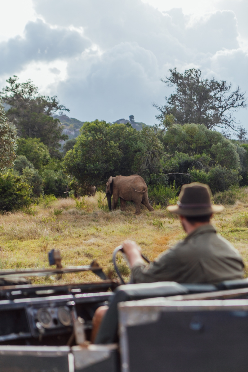 Encounter Big Game in your Land Rover with Sandgrouse Travel