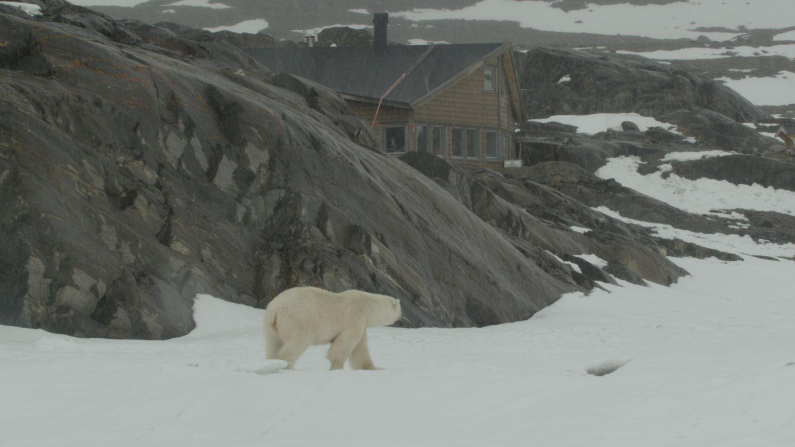 Luxury Cabin in the Arctic